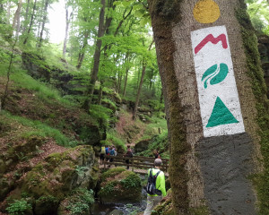 Hiking in Mullerthal (2)