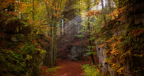 It's the perfect season to lace up those hiking boots and discover the Mullerthal Region – Luxembourg's Little Switzerland with its Mullerthal trail. © Alfonso Salgueiro www.alsalphotography.com/LFT